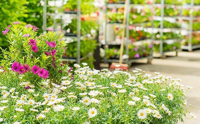 Garden retail store image