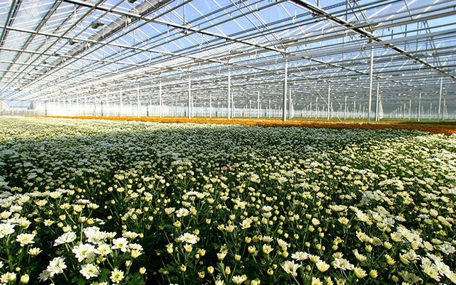 Large greenhouse with annual plants
