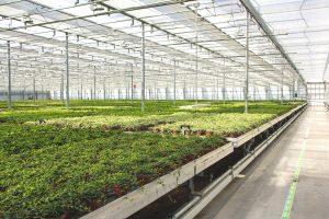 greenhouse webinar series